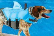 Shark Dog life jacket